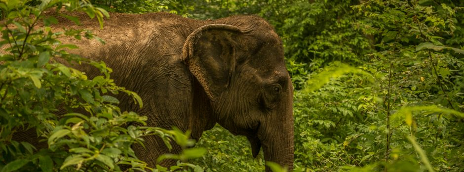 laos-luang-prabang-elephant-village-photo-by-aaron-minks--DSC04808-Edit