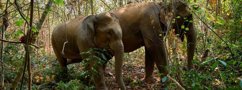 FEB202 elephant in jungle 06