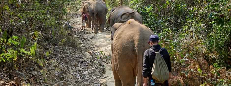 FEB202 elephant in jungle 09