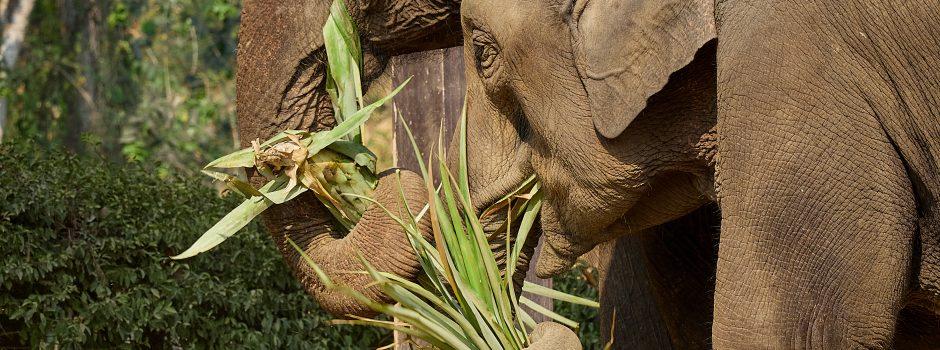 FEB202 elephant in jungle 13