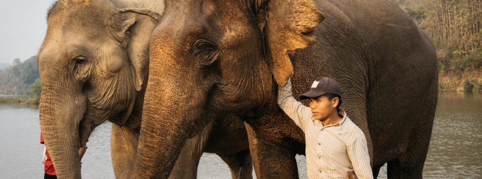 FEB2020 with mahout 03